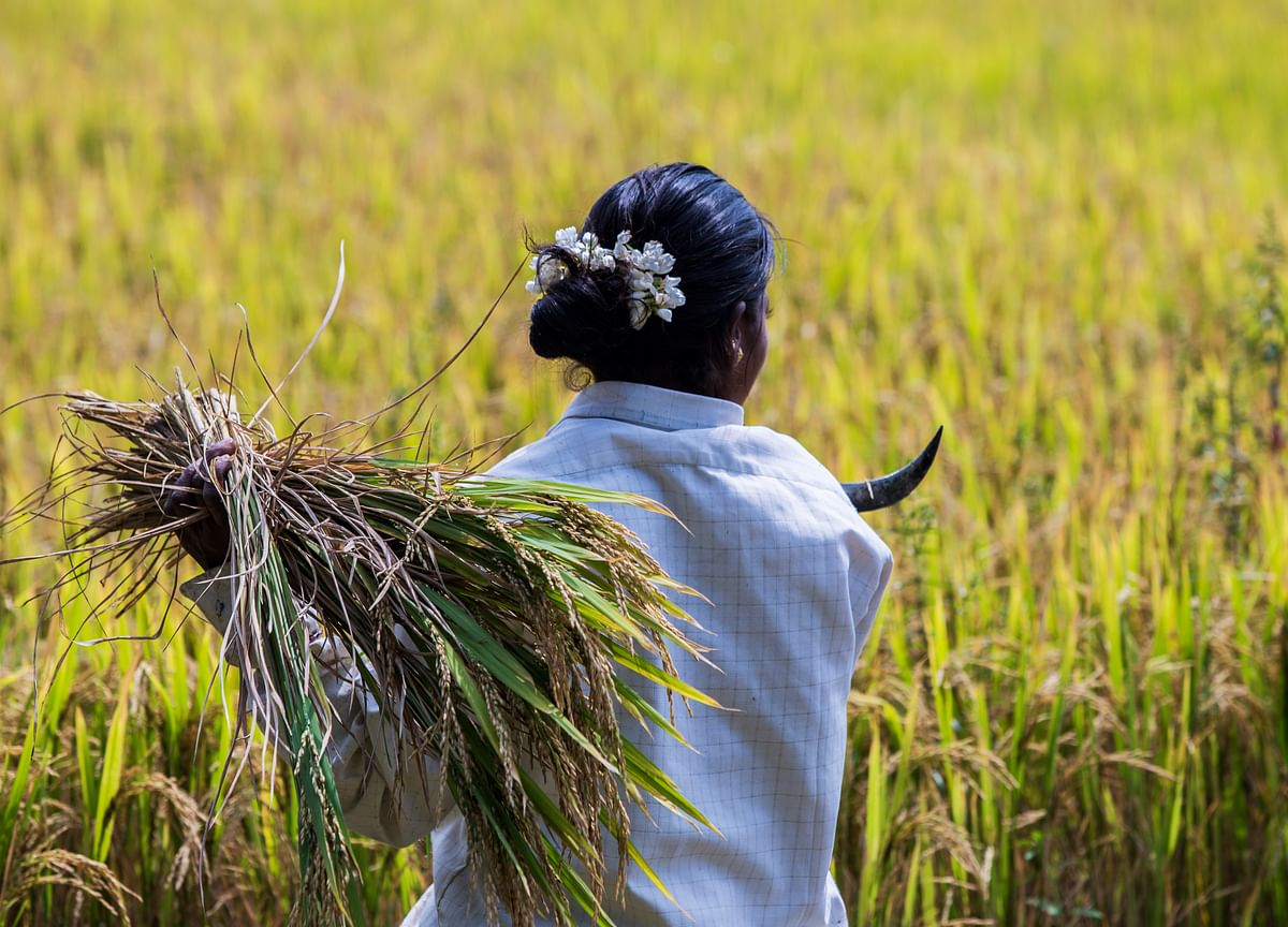 MSP: Minimum Support Price For Paddy Hiked By 13%