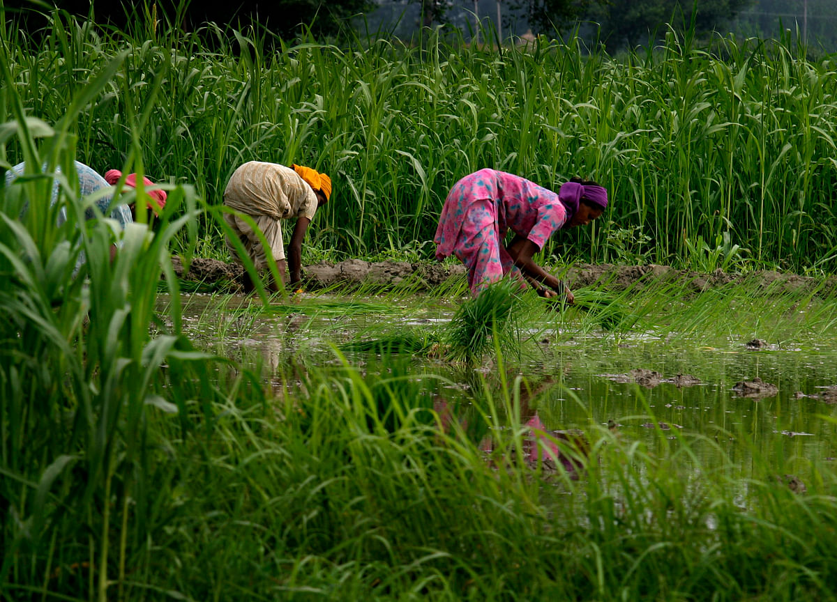 India Announces Modest Hikes In MSP For All Kharif Crops In FY20