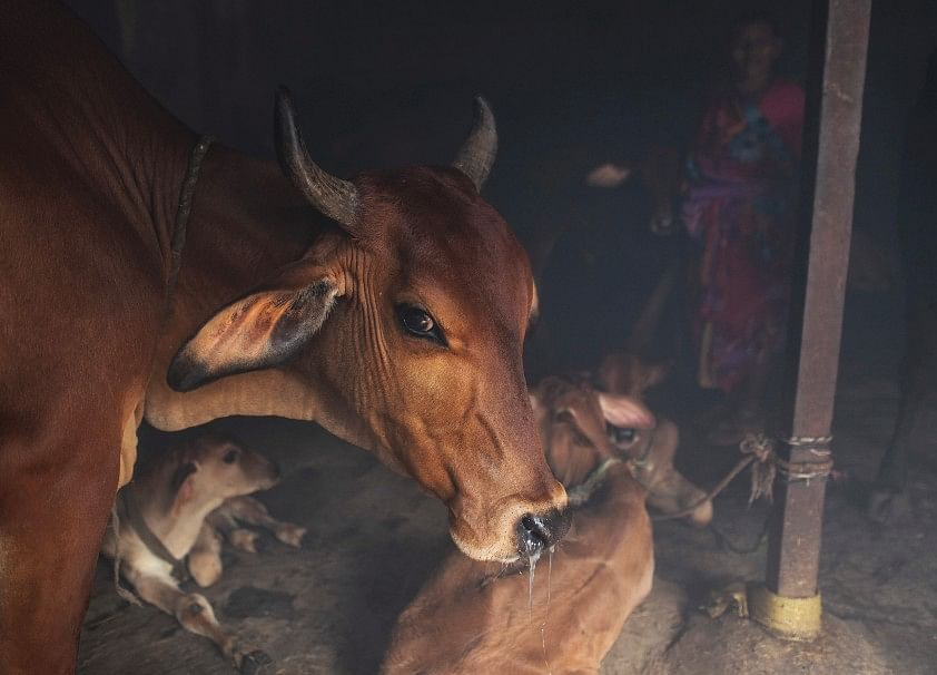 Supreme Court Junks PIL Seeking Ban On Animal Slaughter For Meat Export