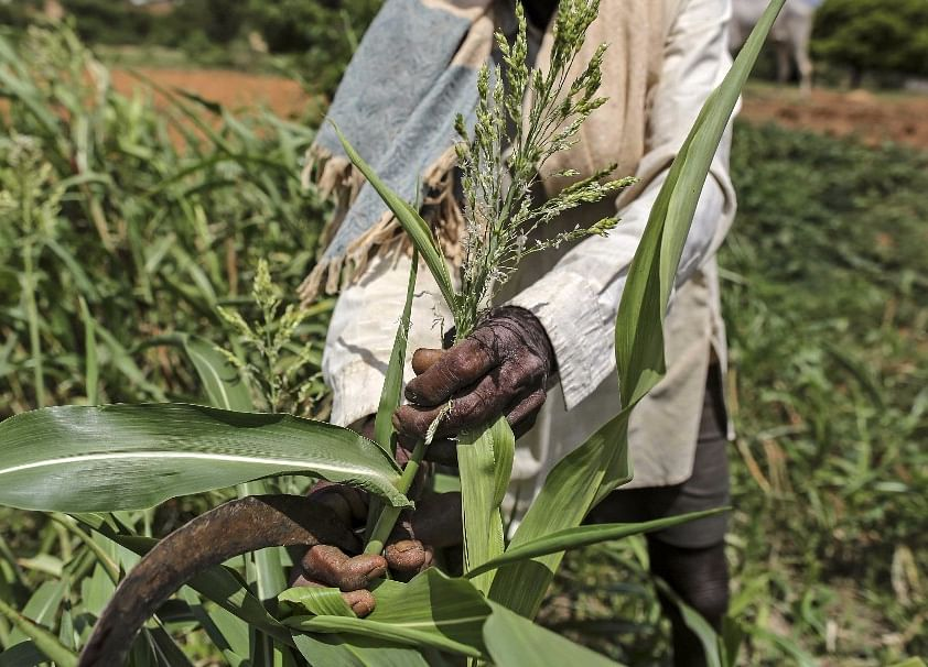 Fertiliser Makers Expect Direct Subsidy Transfer Benefits From Next Year