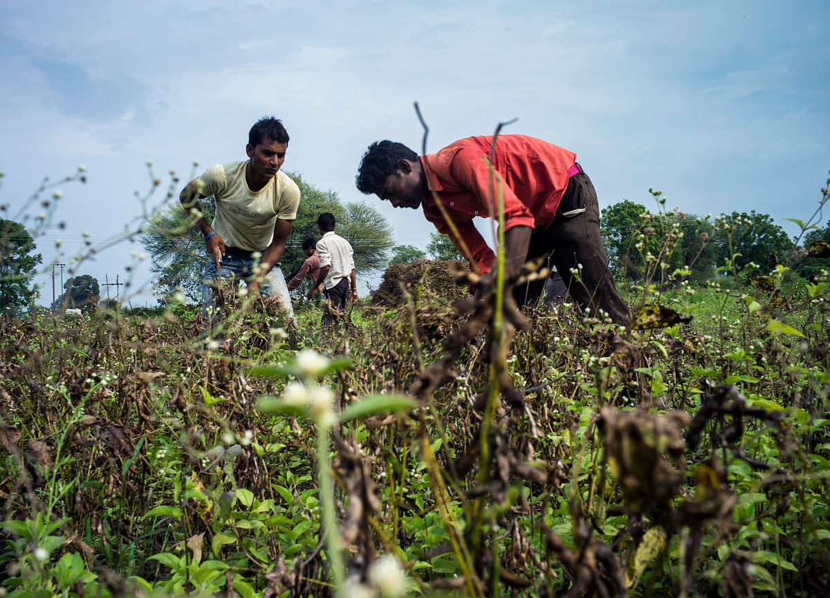 India Looks for More Private Capital in Farms to Boost Incomes