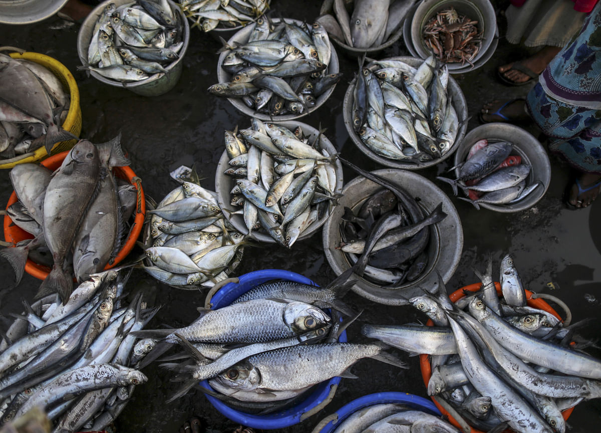Budget 2019: Government Announces New Scheme To Boost Fish Processing