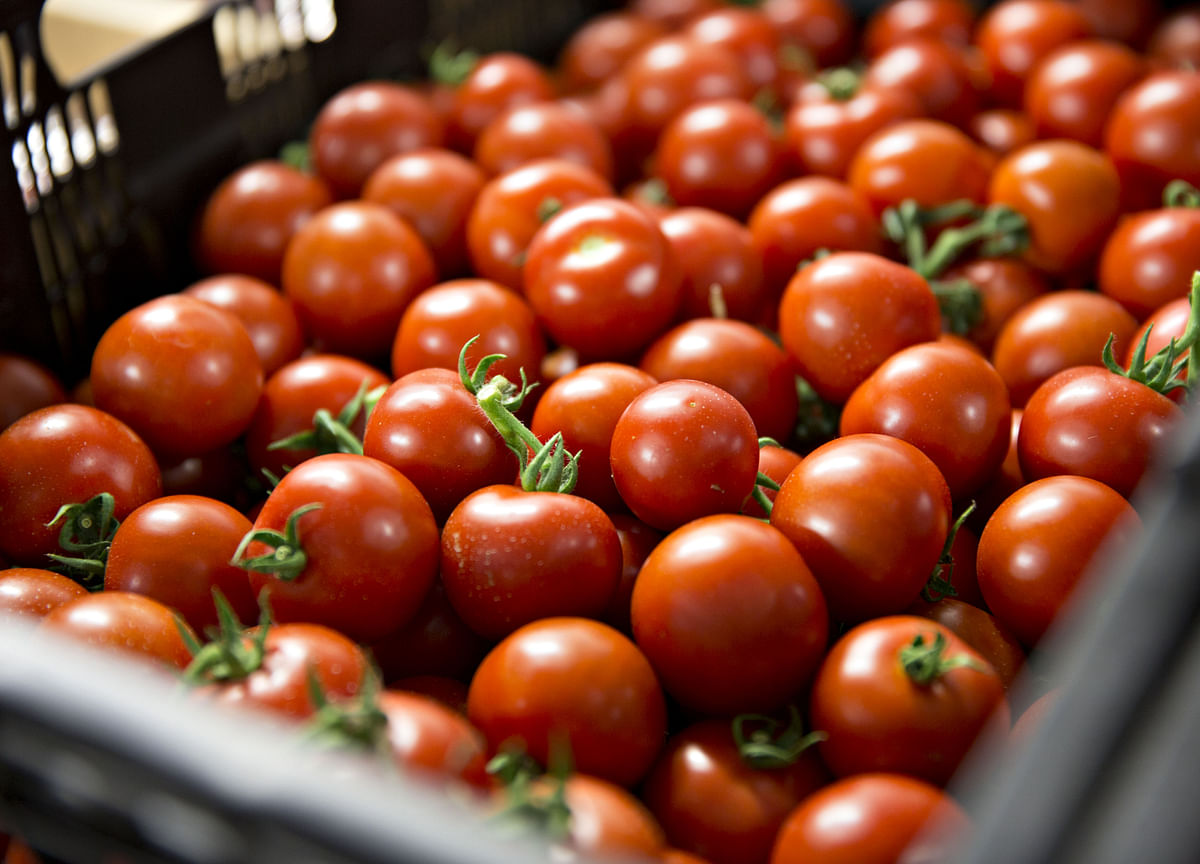 The Internet of Tomatoes Is Coming, Starting With Boston Salads
