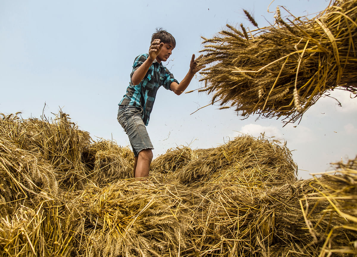 Cabinet Hikes Wheat MSP By 6%