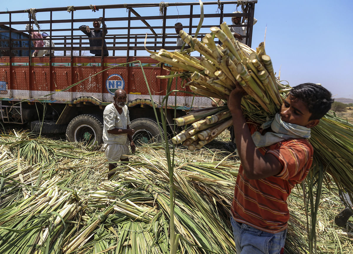 Government Approves Rs 5.5 Per Quintal Subsidy For Sugarcane Farmers