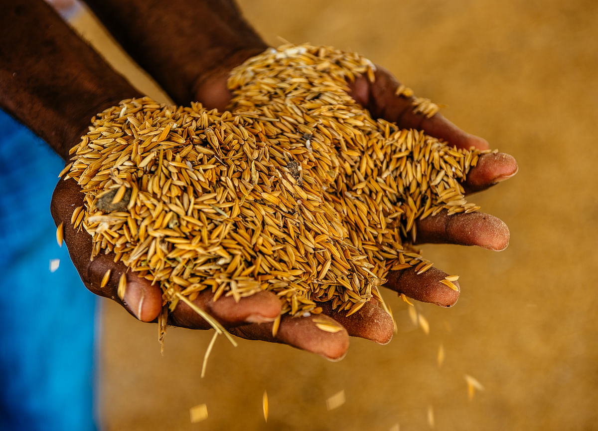 CCEA May Raise Minimum Support Prices Of Paddy, Ragi Today