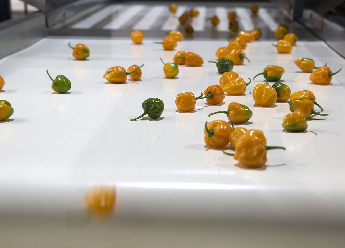Cryptocurrency Backed by Habanero Peppers Is a Thing in Mexico