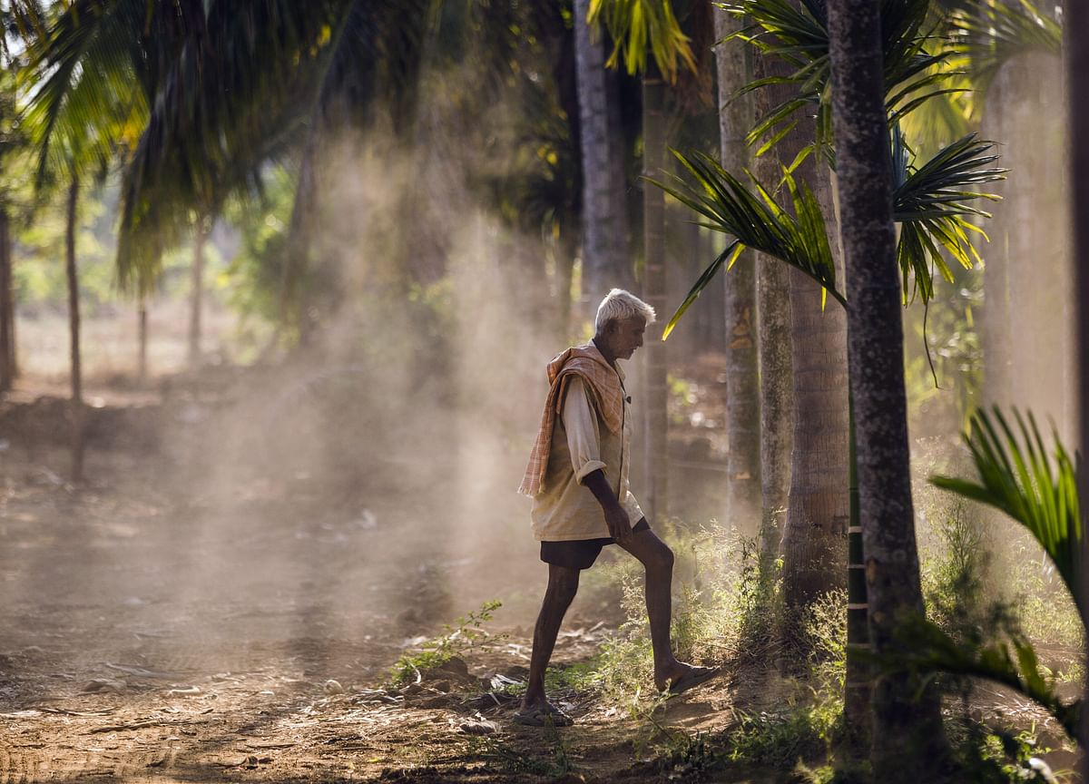 India Considering Paying Farmers Cash Instead ofSubsidies