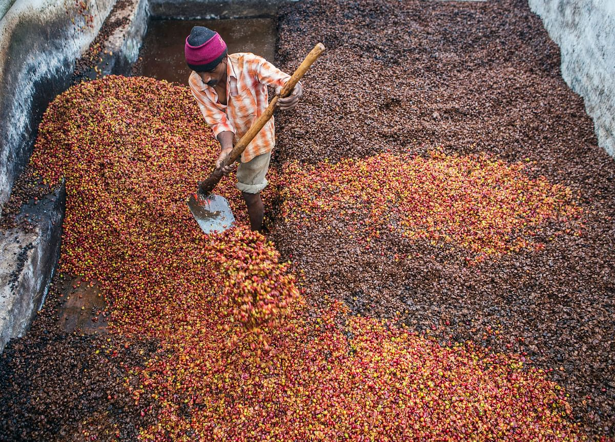 Coffee Waste Is Now Fetching a 480% Premium Over Coffee Itself