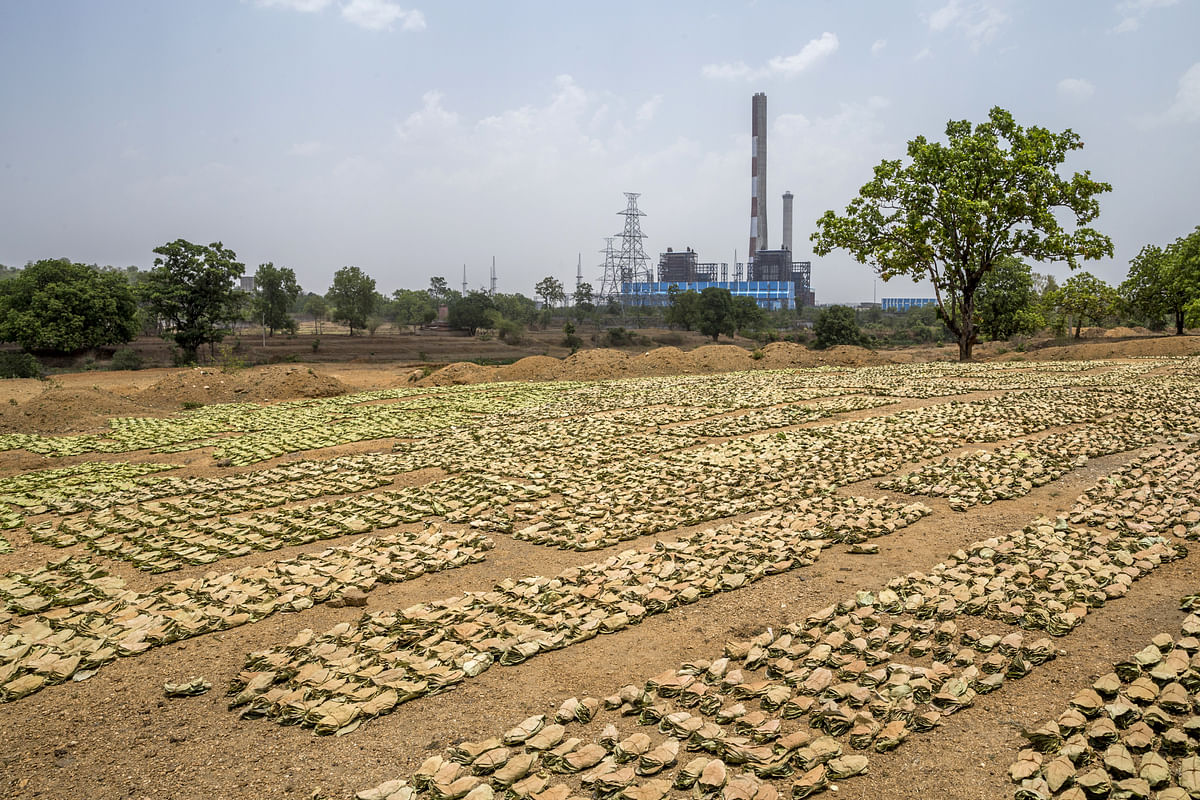 Mahua leaves lie on the ground  in Latehar district, Jharkhand, India, on May 17, 2018. (Photographer: Prashanth Vishwanathan/Bloomberg)