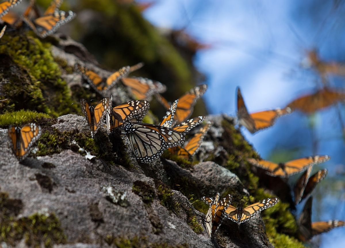 Income Support Schemes And The Butterfly Effect
