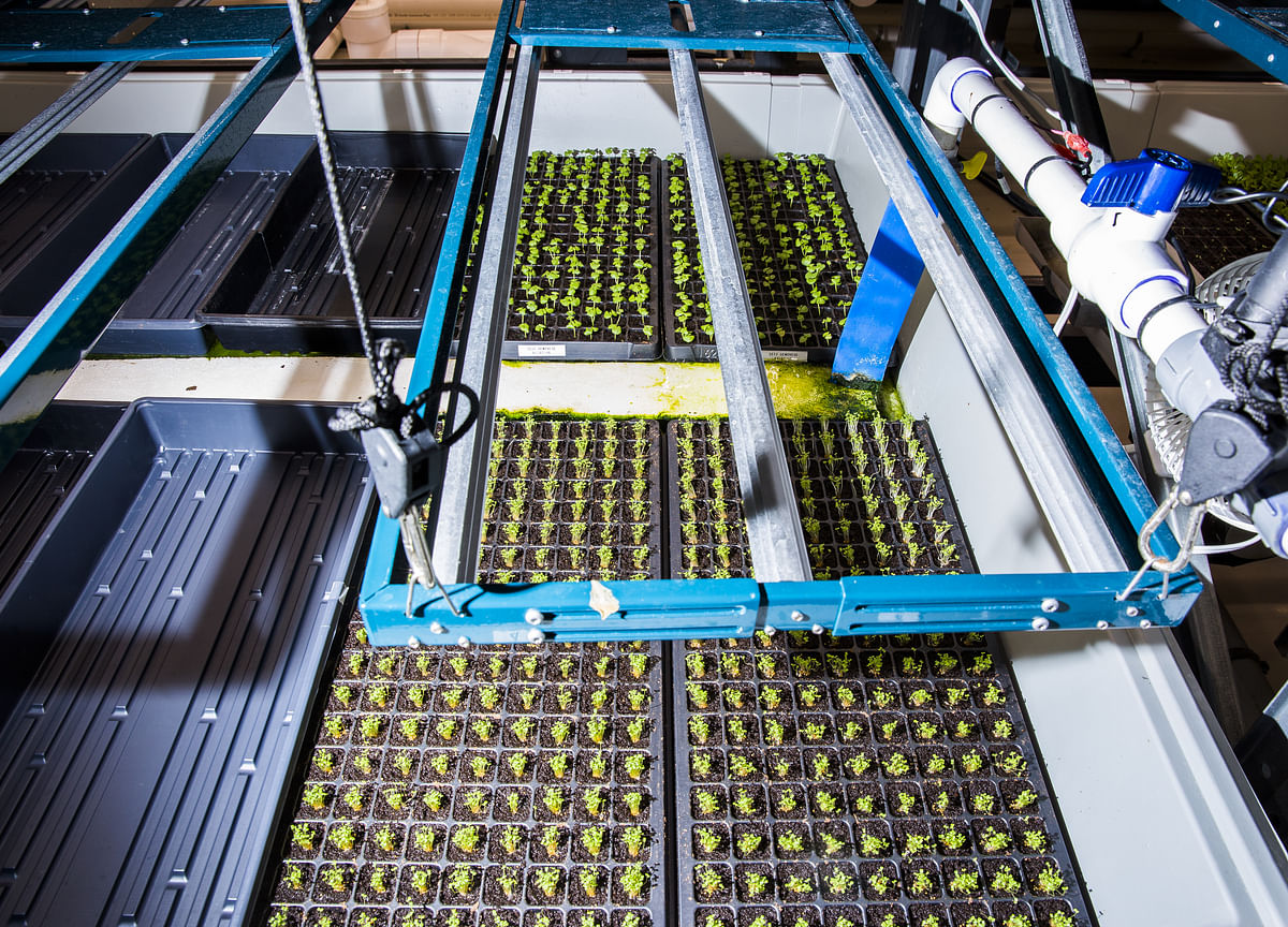 At This High-Tech Farm, the Boss Is an AI-Powered Algorithm