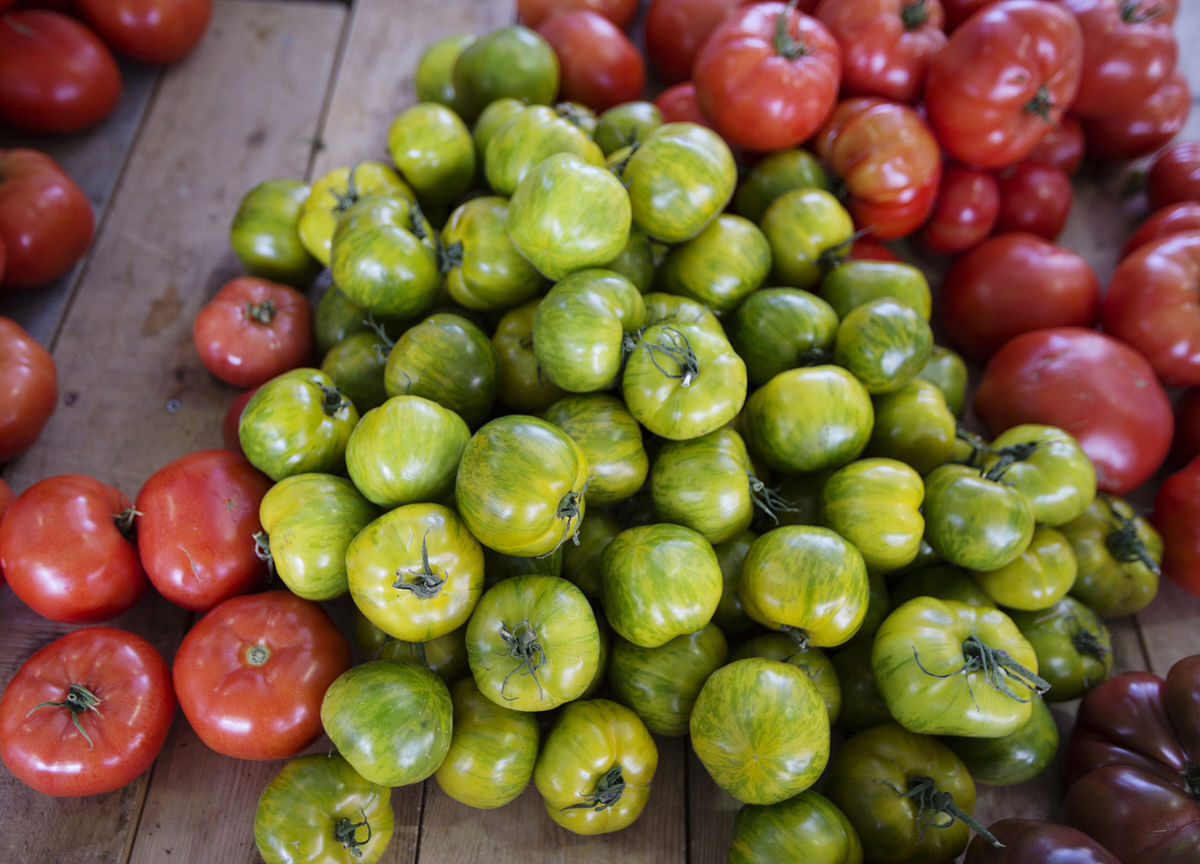 This Startup Helps Urbanites Grow Their Own Organic Fruits And Vegetables
