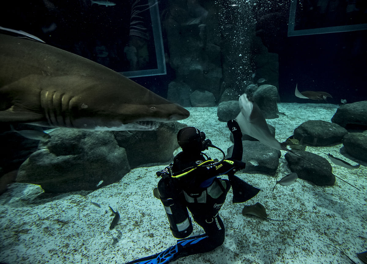 Drones and AI Ward Off Shark Attacksas PredatorsHuntCloser to Shore