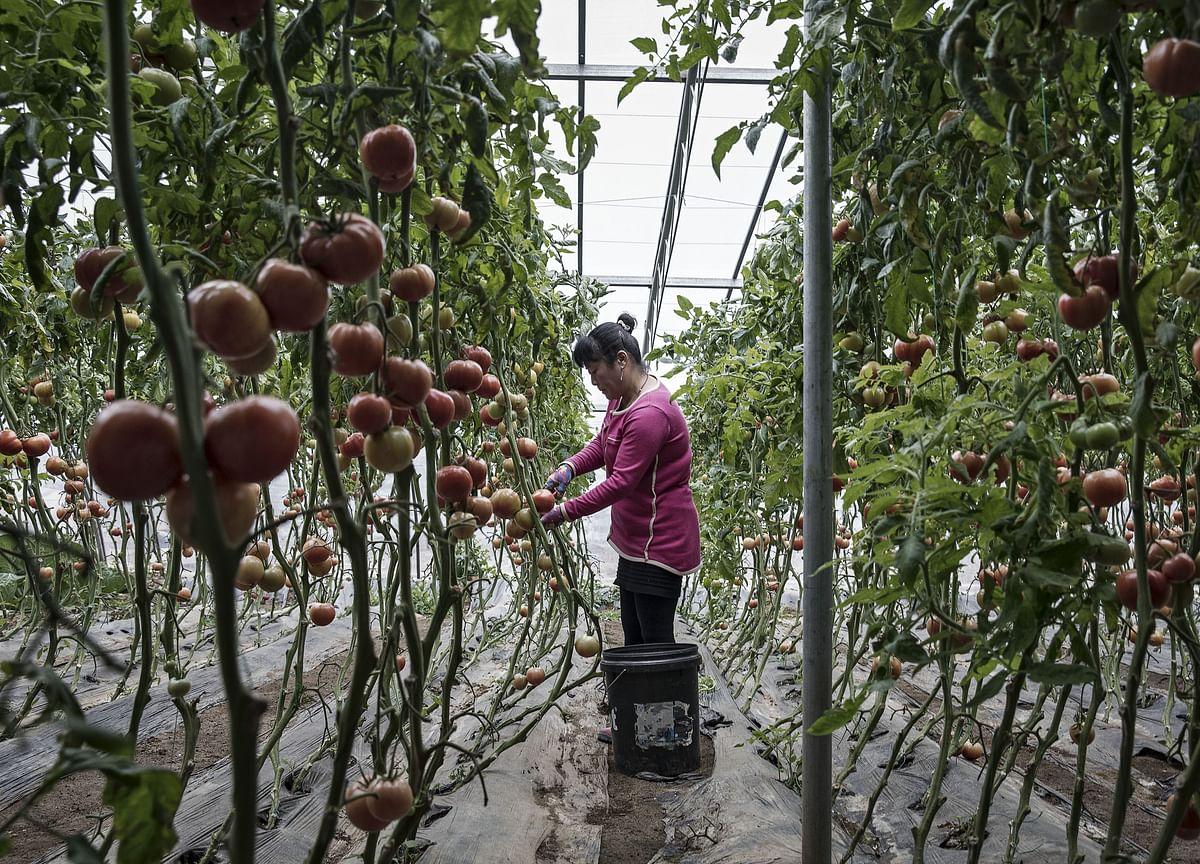 A China Veggie-Selling App MayBe Worth $7 billion