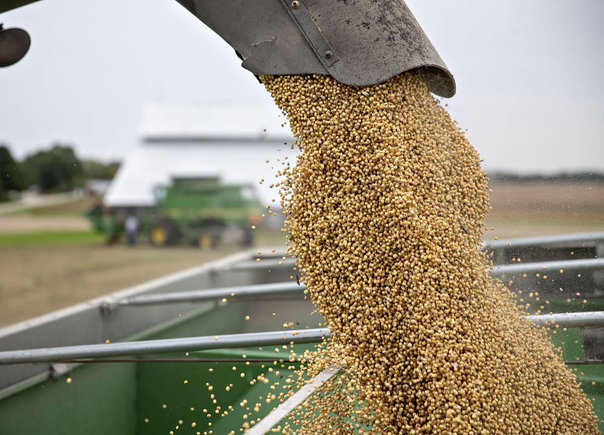 China Boosts Soybean Import Outlook as U.S. Trade Optimism Grows