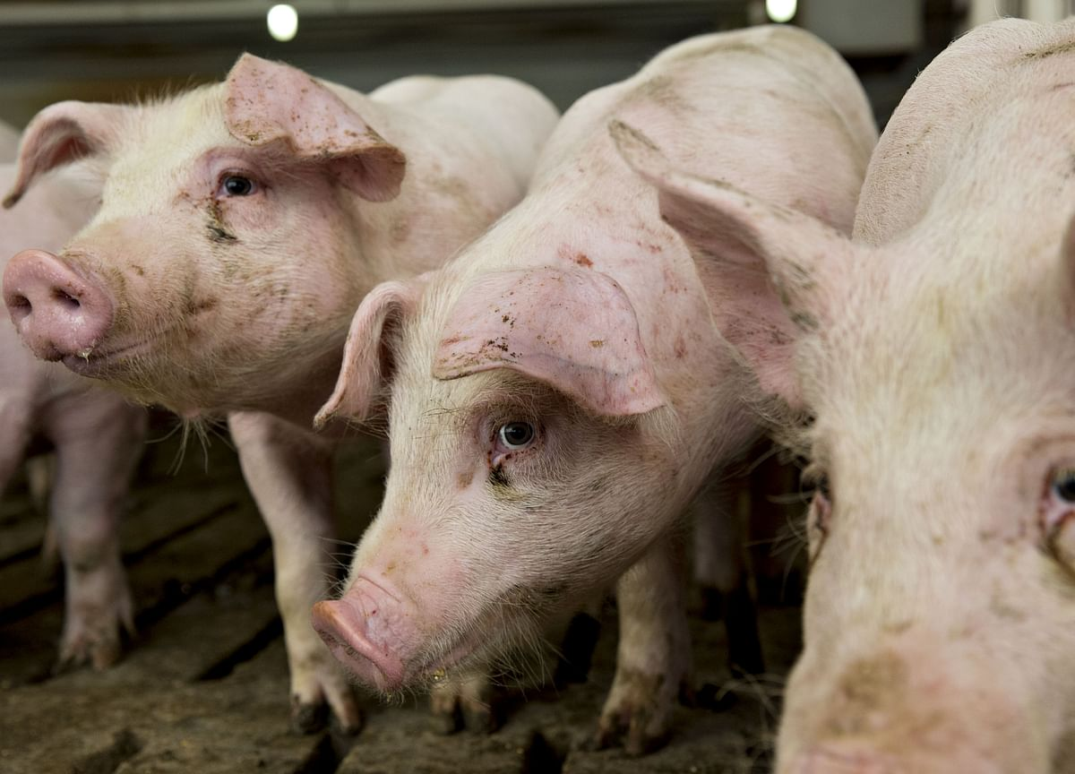 WhyIt's Difficult to Find Organic Pork