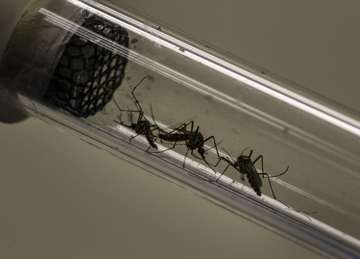Google's Parent Has a Plan to Eliminate Mosquitoes Worldwide