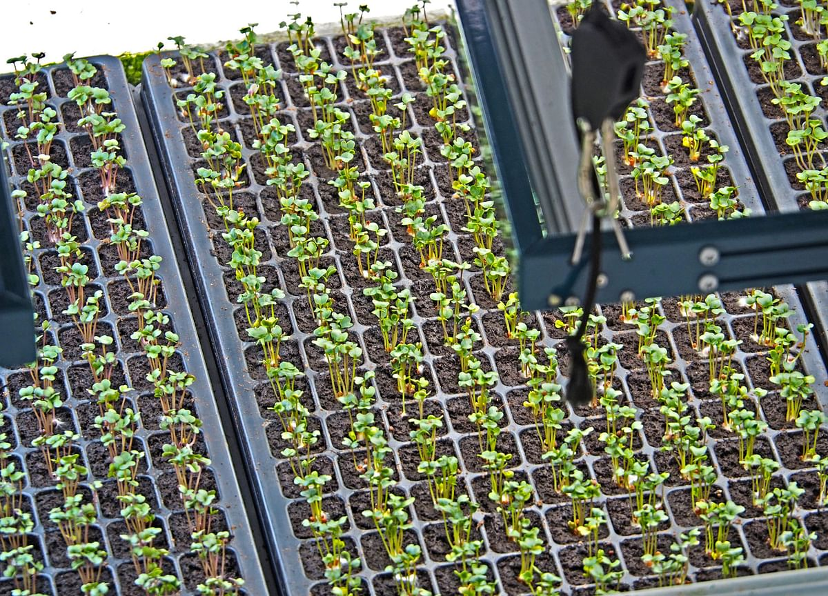 Startup Street: Robots Growing Crops– This Startup Has Alphabet And Uber CEO's Attention
