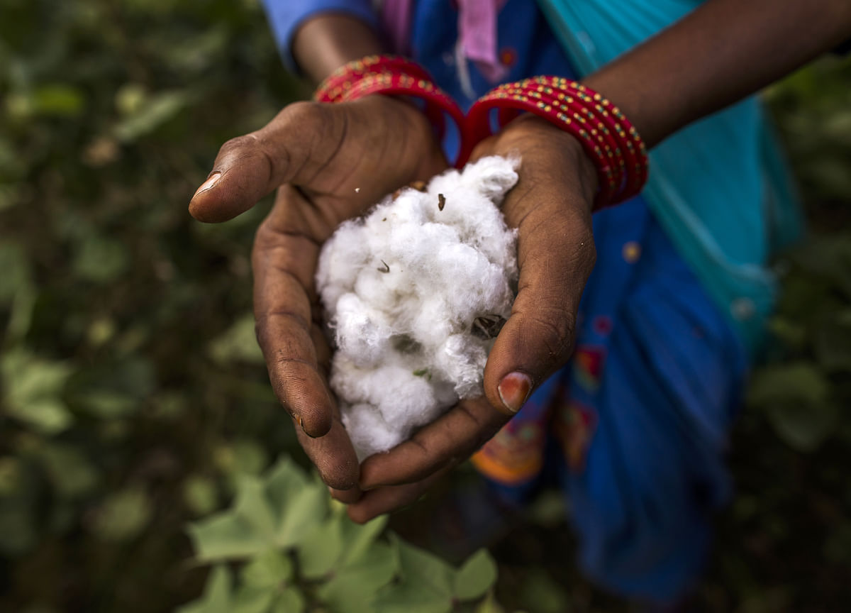 India Plans to Sell Cotton to Bangladesh to Trim Record Reserves
