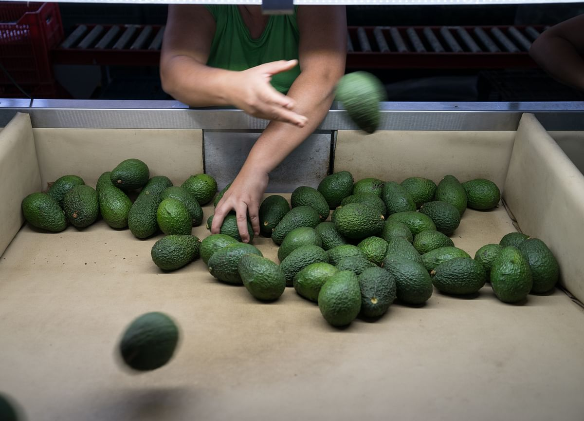 Avocados Are the New Coal for Hedge Funds Chasing Sustainable Cash