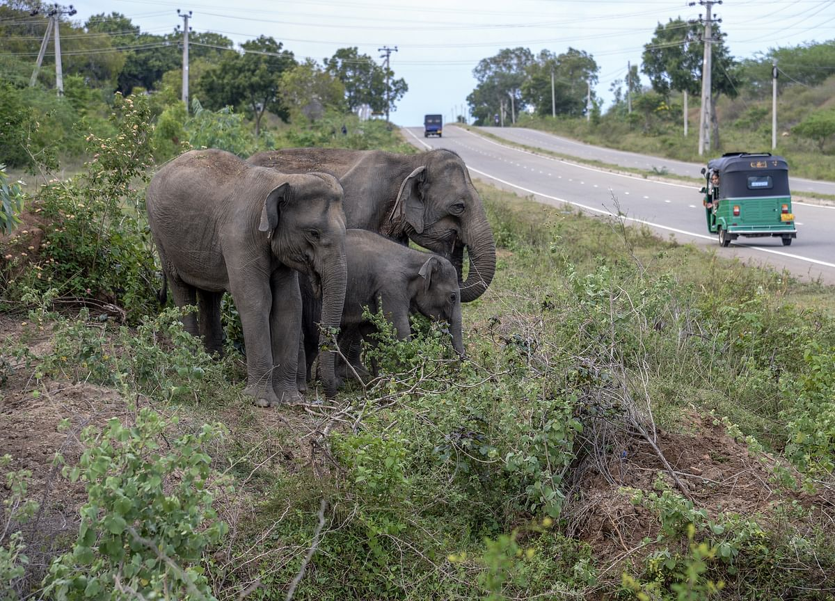 Country With the Most Elephants Wants to Lift Hunting Ban