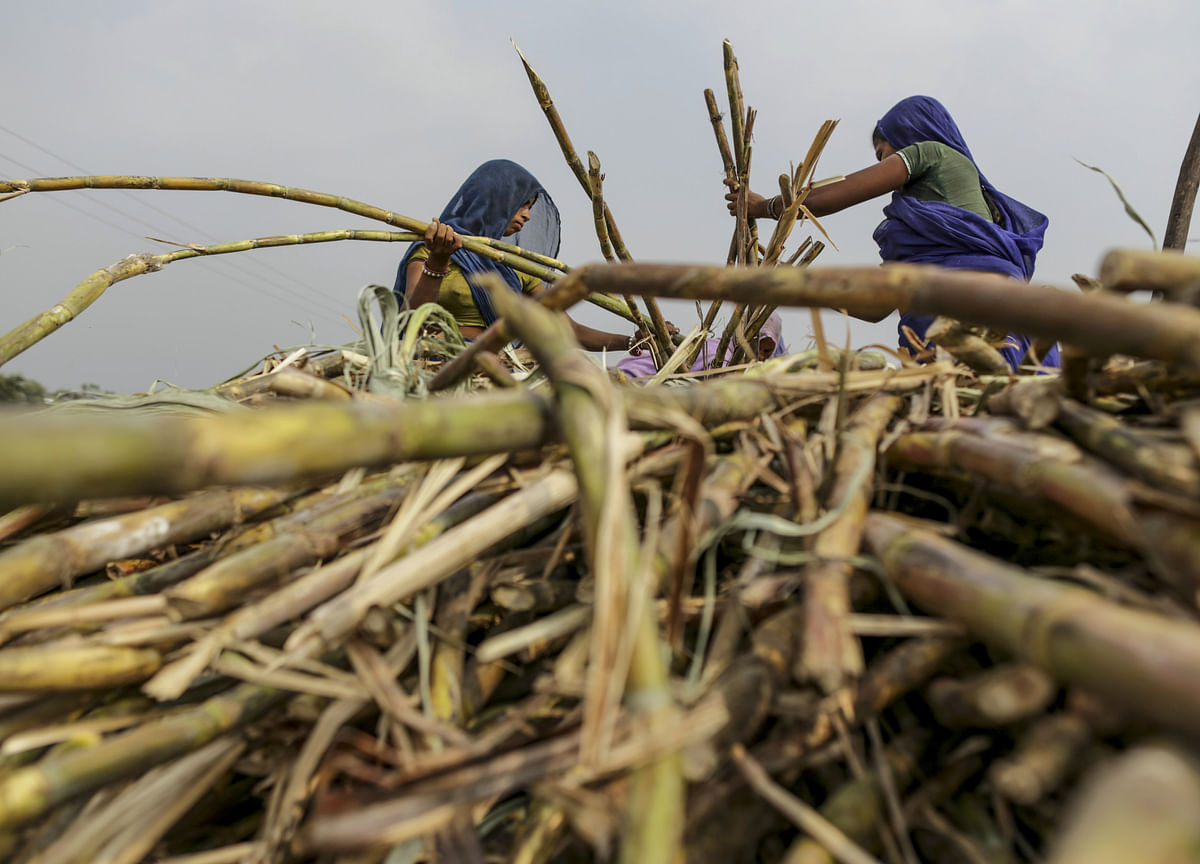 Sugar Output in India Seen Sinking to 3-Year Low Next Season