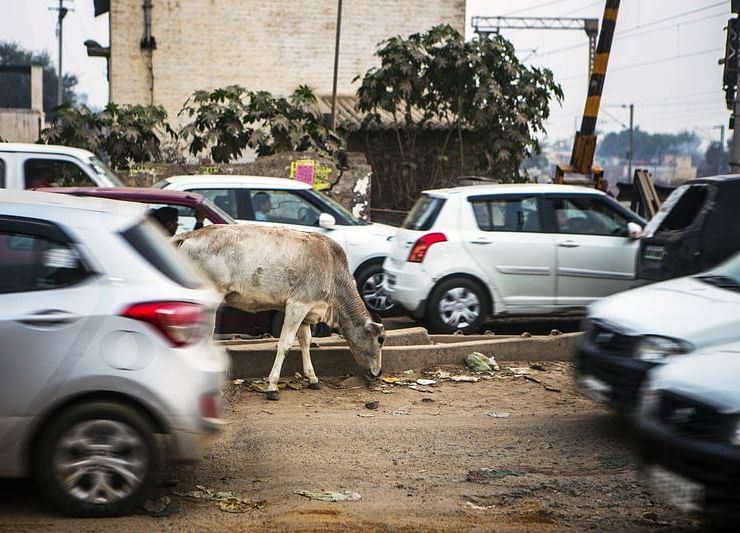 Cow Vigilantes in India Killed at Least 44 People, Report Finds