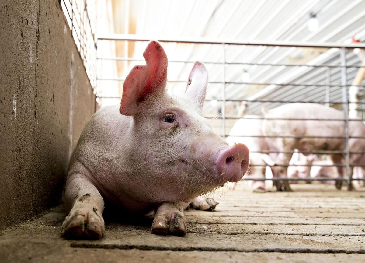 U.S. Seizes 1 Million Pounds of Smuggled Chinese Pork