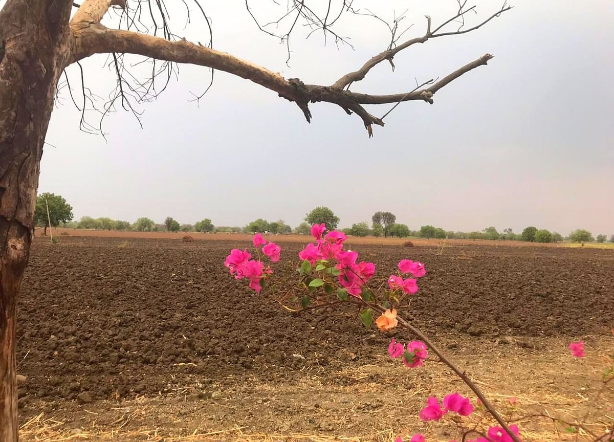 Parched Beed Is Caught In A Vicious Cycle Of Drought And Unemployment
