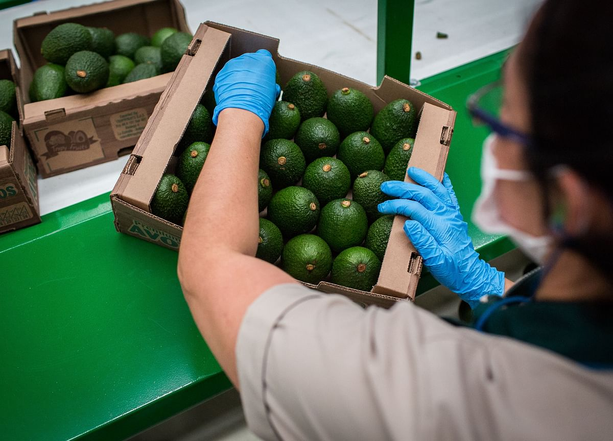 Avocados Are the 'Pandemic-Proof' Crop in Lockdown Health Craze
