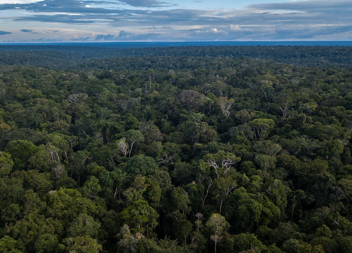 Wealthy Families Are Adding Forests to Their Portfolios