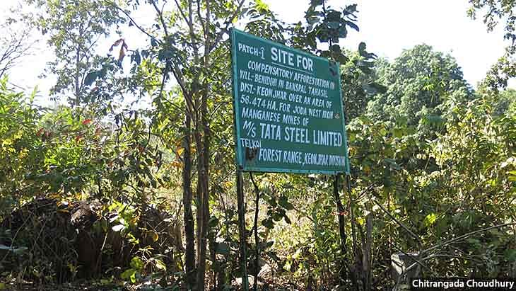 An undulating forested patch in Benedihi village has been marked out for compensatory afforestation by the forest department to offset forest clearance awarded to a Tata Steel Limited mine.