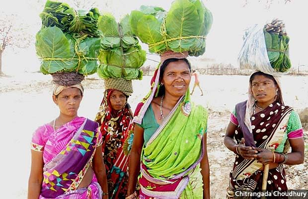 Residents of Thaggaon village, Samudribai Salaam, Sonmati Orkera, Sampatiya Salaam and Indukunwar Orkera (left to right), return home after gathering forest produce from the village's forested commons. While Thaggaon is yet to get recognition under the Forest Rights Act for such community forest rights, officials have earmarked 500 acres of land in the village for compensatory plantations.