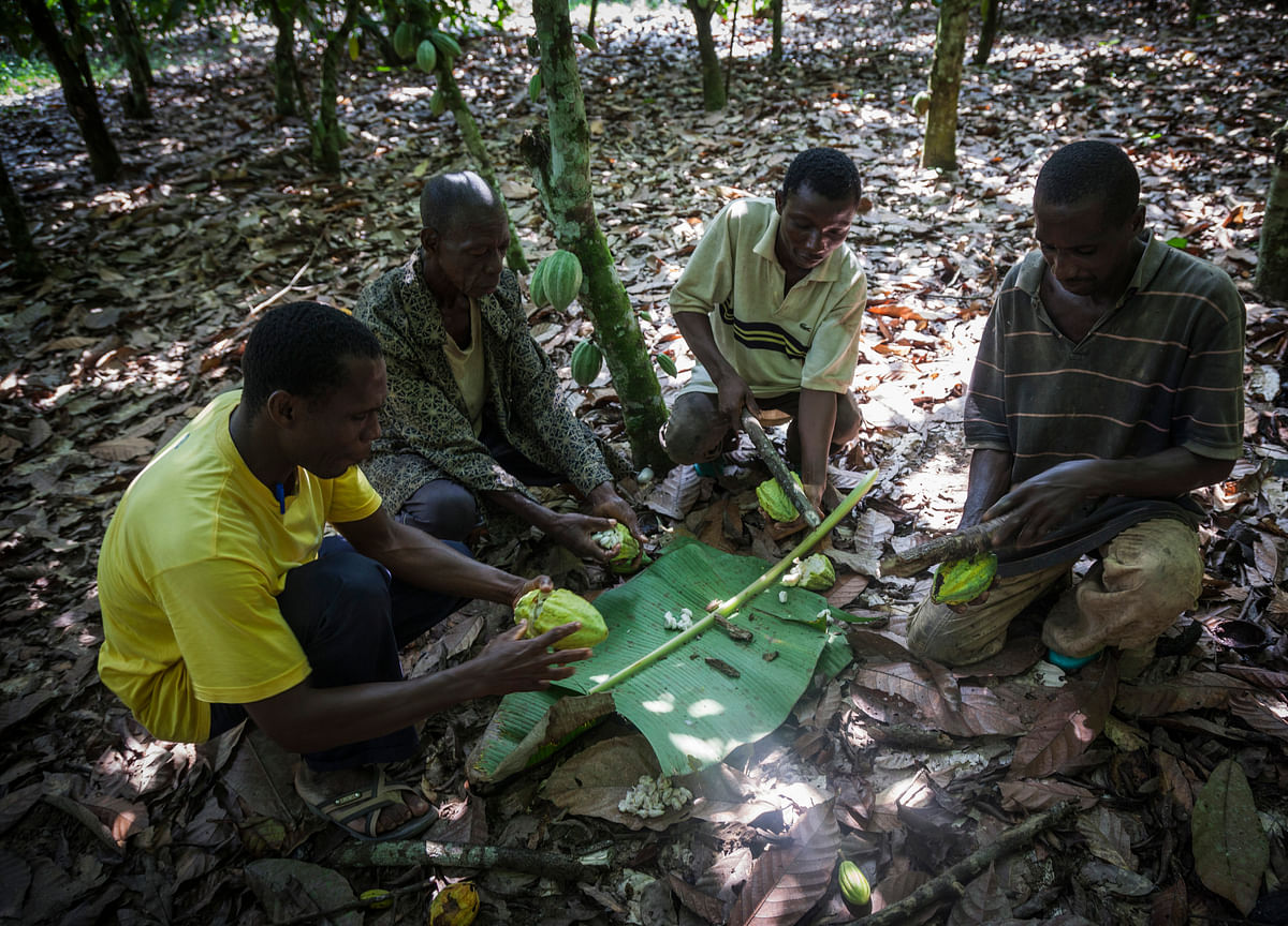Ivory Coast Says Minimum Cocoa Price Needed to Draw New Growers
