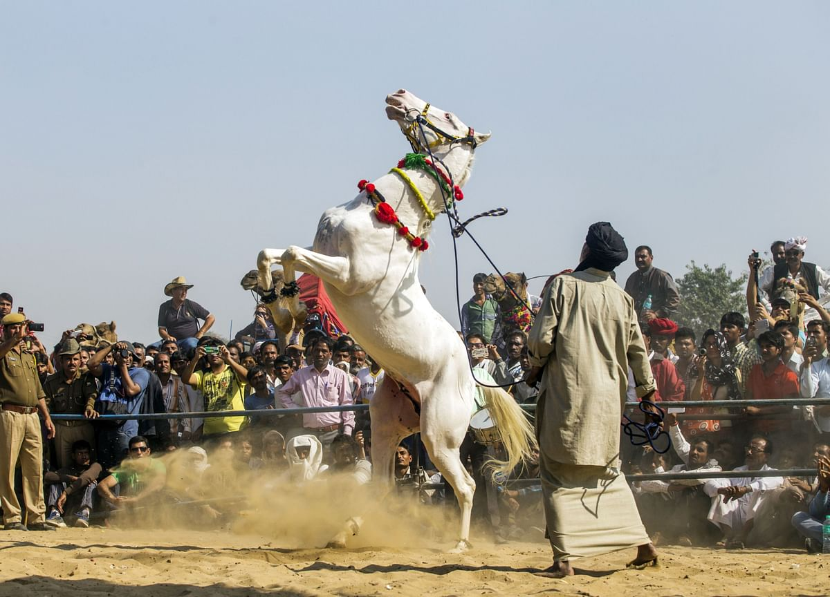 India's Unicorns Are More Like Workhorses