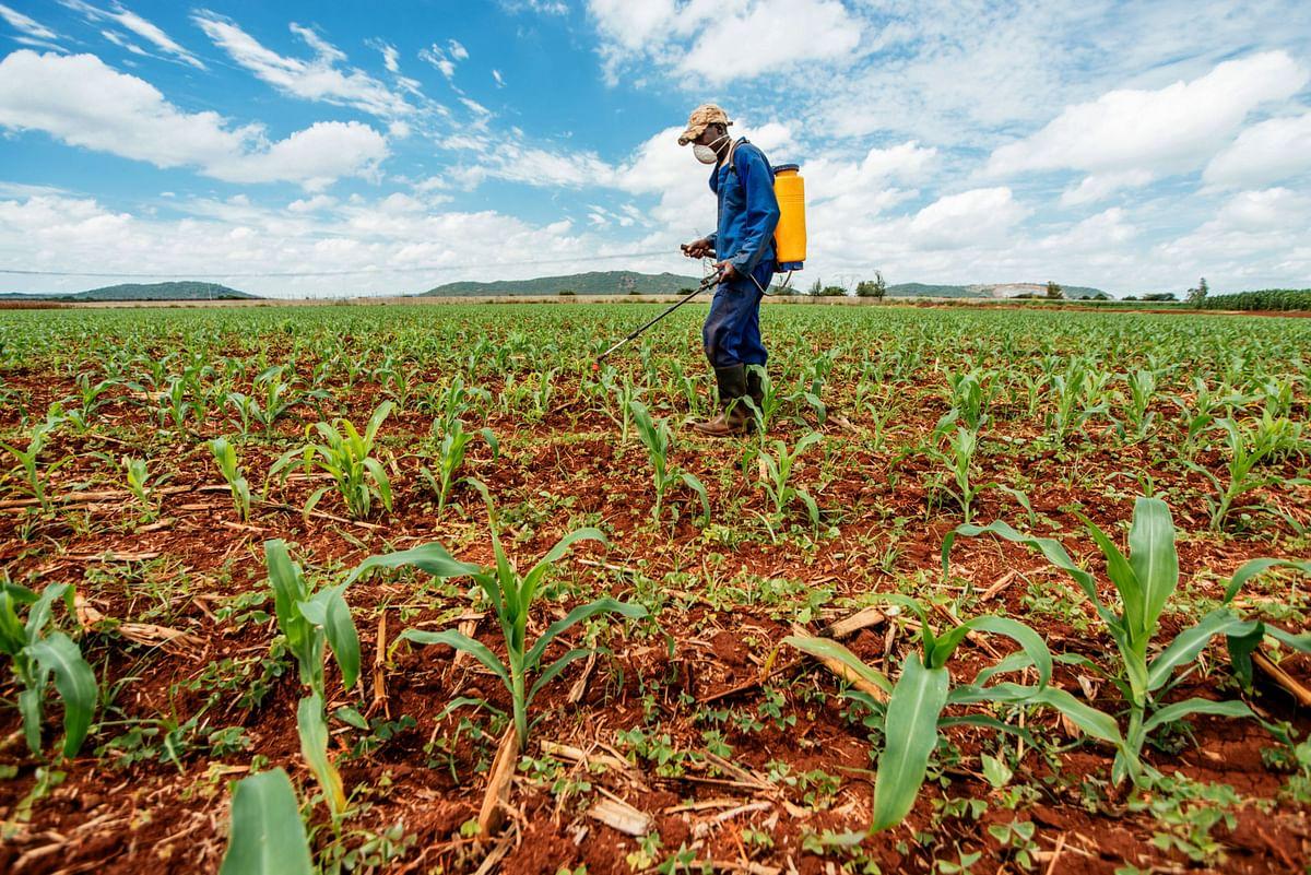 Economic Survey 2021: New Farm Laws A Remedy, Not A Malady
