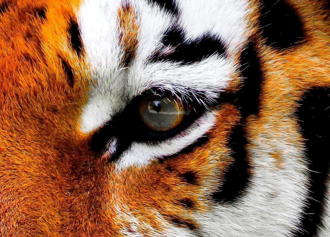 Startup Street: UrbanClap Has The Eye Of The 'Tiger'