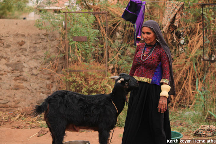 """Ten years ago, each of the hundred families in the village had at least 350 sheep and the whole village had around 1,200 cows,"" recalls Neeru Ben, a herder. ""Now only 20 families have livestock. I have seen my own sheep die of hunger because there are no grazing lands."" (Source: IndiaSpend)"
