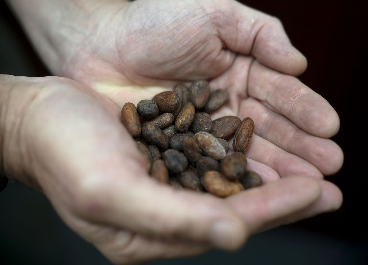 Asia's Chocolate Bonanza Spurs Quest for Locally Grown Beans