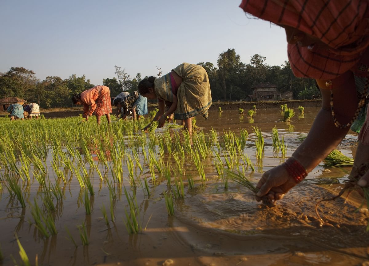 India Estimates Kharif Crop Output Slightly Lower At 140.57 Million Tonne In FY20