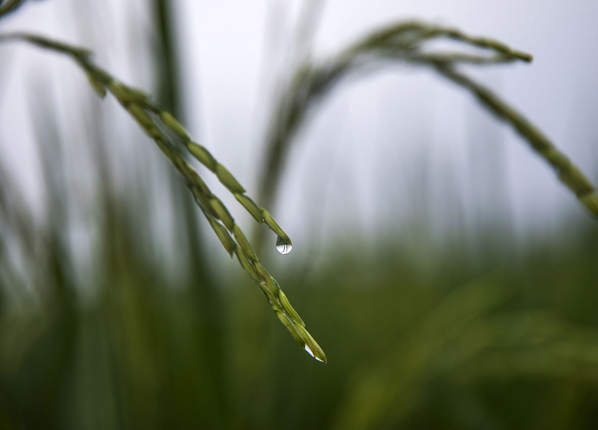 The Monsoon Is  Proof Of Life, Not A Wrecker Of Human Life