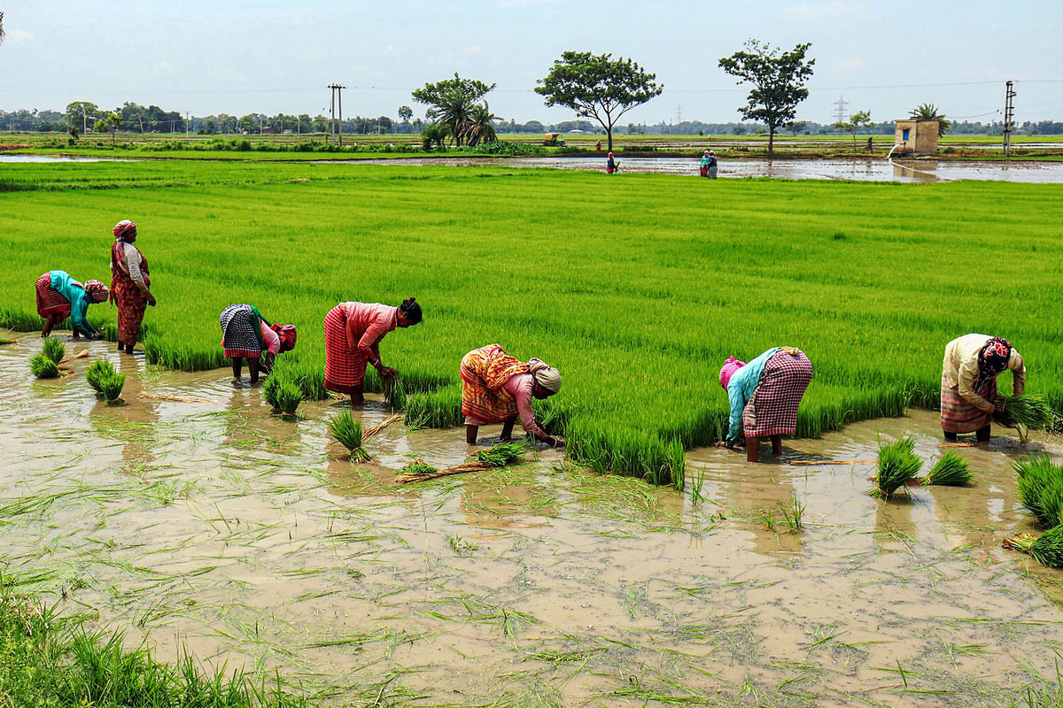 Monsoon's Late Surge Helps, But Floods Hurt Crop Prospects
