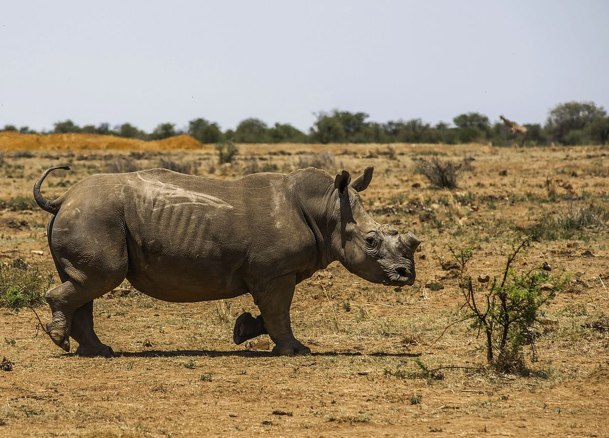 Southern African Nations Say They May Quit Global Wildlife Pact