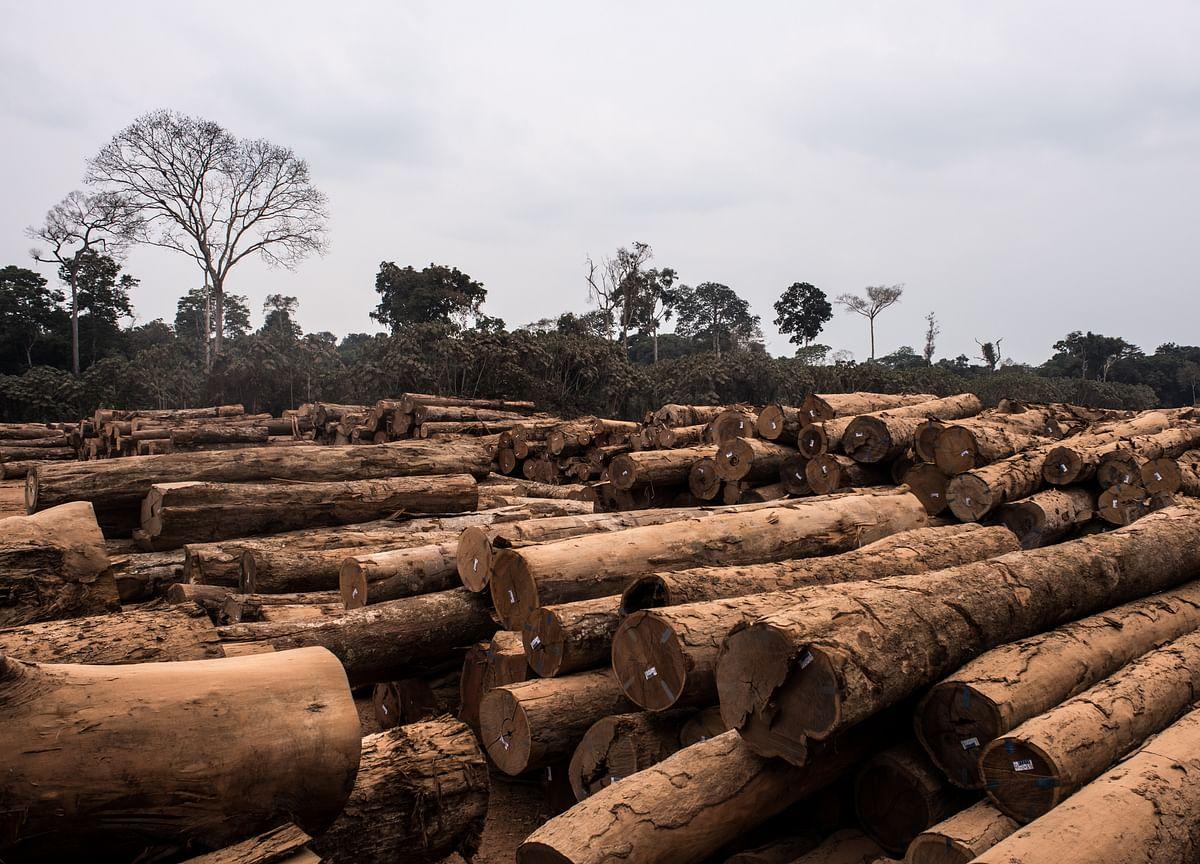 Brazil Backtracks After Announcing a Halt on Deforestation Fight