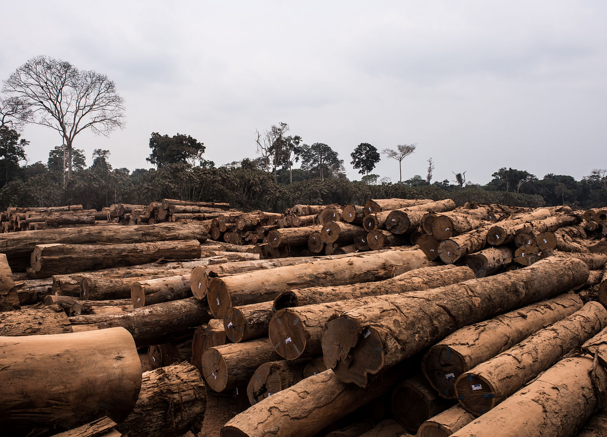 Investors With $16 Trillion Demand Action on Deforestation