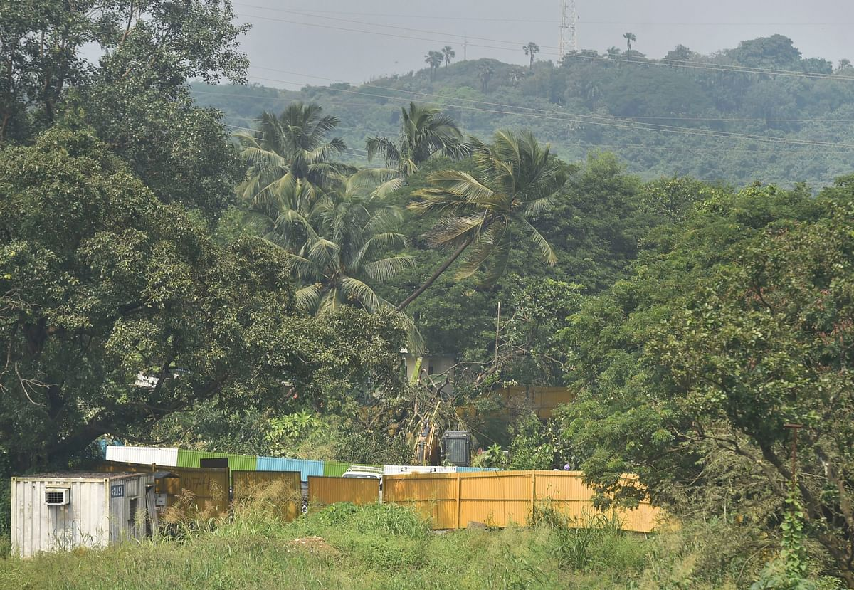 Workers cut-down trees for the Metro car shed project in the Aarey colony (Photo: PTI)