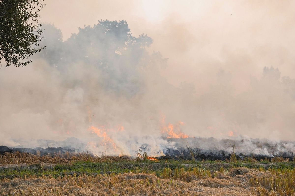 Paddy stubble burns in a farm on the outskirts of Amritsar, Punjab, on Oct. 31, 2019. (Photograph: PTI)