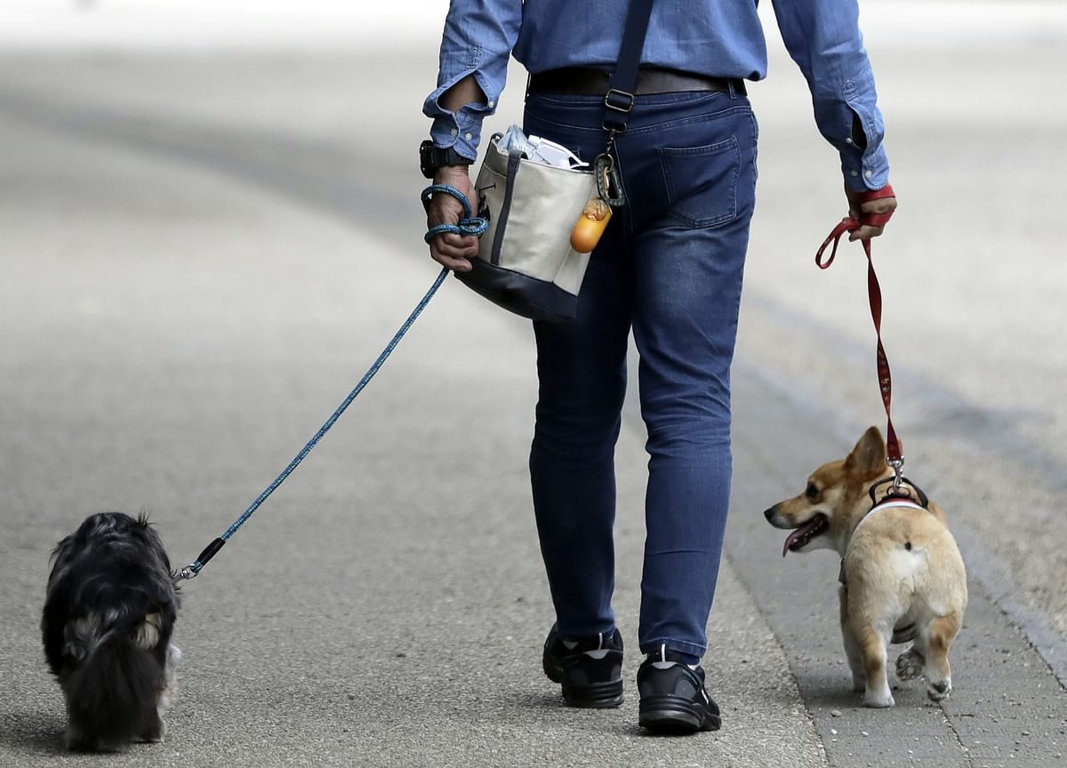 SoftBank Sells Its Stake in Wag Back to the Dog-Walking Startup