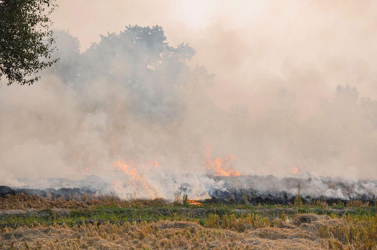 Stubble burning at a field near Patiala, Saturday, Nov. 2, 2019.(Source: PTI)